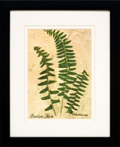 Boston Fern Print$32.21 - Reg. $42.95!